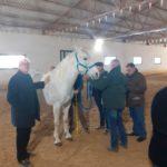 Approvazione di uno stallone che opererà presso il centro di fecondazione dell'azienda di Nino Salerno